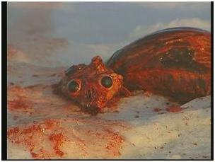 Φώκια μωρό νεκρό 2
