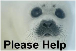 Φώκια μωρό please help